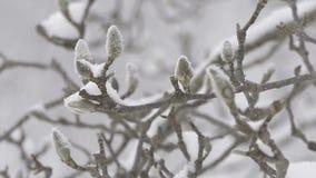 Дерево зимы, падение снега, в Toyama, Япония сток-видео