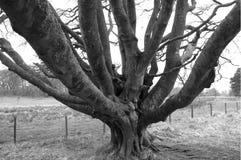 Дерево зимы с массой ветвей Стоковая Фотография