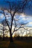Дерево зимы чуть-чуть на заходе солнца Стоковое Изображение RF