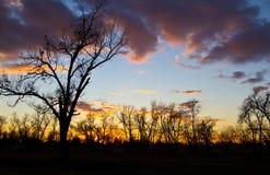 Дерево зимы чуть-чуть на заходе солнца Стоковое фото RF