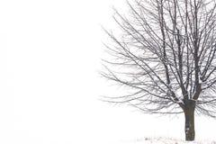 Дерево зимы Стоковая Фотография