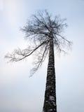 Дерево зимы Стоковая Фотография RF