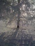 Дерево зим Стоковая Фотография