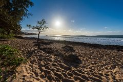 Дерево зонтика на пляже захода солнца на северном береге Оаху, Гаваи Стоковые Изображения RF