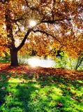 Дерево золота стоковое фото rf