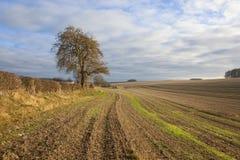 Дерево золы и стерня соломы Стоковое Изображение RF