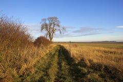 Дерево золы и тропа Стоковые Фотографии RF