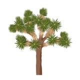 Дерево Иешуа - изолированное на белой предпосылке Brevifolia юкки Стоковое Изображение RF