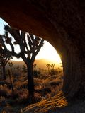 Дерево Иешуа Калифорния на заходе солнца Стоковая Фотография RF