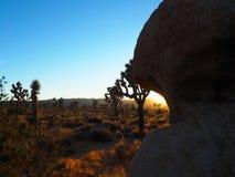Дерево Иешуа Калифорния на заходе солнца Стоковые Фото