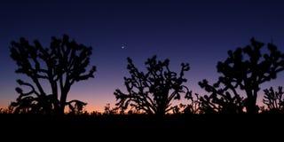 Дерево Иешуа на сумерк Стоковая Фотография RF