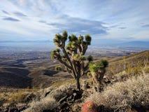 Дерево Иешуа обозревая Лас-Вегас Стоковая Фотография
