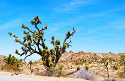 Дерево Иешуа стоковое фото