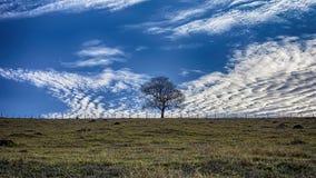 Дерево изолированное на поле между загородкой вверху холм с голубым небом с облаками Стоковое Изображение RF
