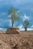 Деревоизолированное Â в поле Стоковые Изображения RF