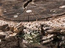 Дерево используемое для пробочки Стоковые Фото