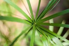 Дерево лист создается для предпосылки стоковые фото