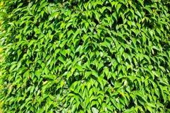 Дерево лист создается для предпосылки стоковое фото rf
