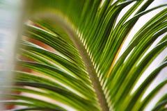 Дерево лист Стоковые Изображения RF