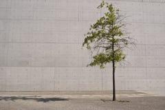 Дерево и бетон Стоковая Фотография