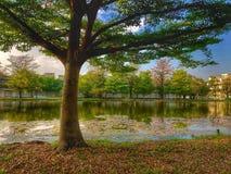 Дерево и большой пруд стоковая фотография
