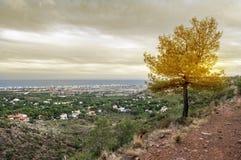 Дерево и взгляды стоковое фото