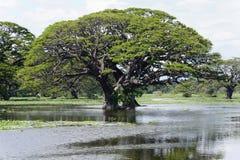 Дерево и вода Стоковая Фотография