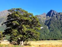 Дерево и горы Стоковое Изображение