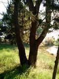 Дерево и заход солнца Стоковое Фото