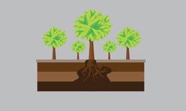 Дерево и зеленый цвет стоковое изображение