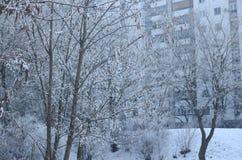 Дерево и здание в зиме Стоковая Фотография