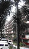 Дерево и здание Стоковое Фото