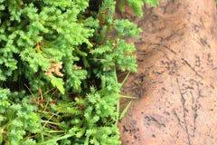 Дерево и камень Стоковое фото RF