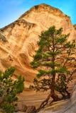 Дерево и корни растя na górze утесов Стоковые Фото