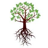 Дерево и корни также вектор иллюстрации притяжки corel Стоковое Изображение