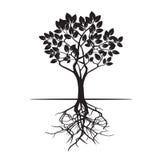 Дерево и корни также вектор иллюстрации притяжки corel Стоковое Фото