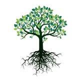 Дерево и корни цвета также вектор иллюстрации притяжки corel Стоковое Изображение