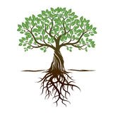 Дерево и корни цвета также вектор иллюстрации притяжки corel иллюстрация штока
