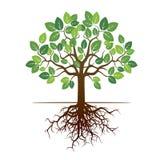 Дерево и корни цвета также вектор иллюстрации притяжки corel Стоковая Фотография