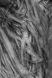 Дерево и корни Стоковые Фото