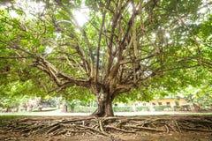 Дерево и корни стоковые изображения