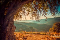 Дерево и красивые холмы стоковые фотографии rf