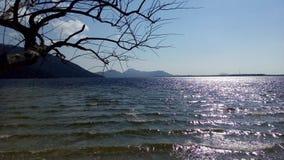 Дерево и море Стоковая Фотография
