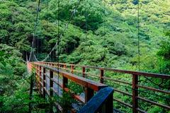 Дерево и мост стоковые изображения