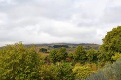 Дерево и небо взгляда осени Стоковое Фото