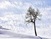 Дерево и небо сцены зимы стоковые изображения rf