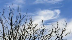Дерево и небо Стоковая Фотография RF