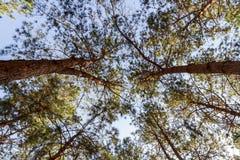 Дерево и небо стоковое фото rf