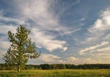 Дерево и небо Стоковые Изображения RF