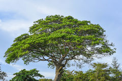 Дерево и небо Стоковая Фотография